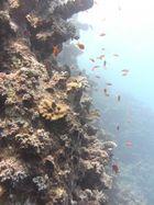 Leben am Riff