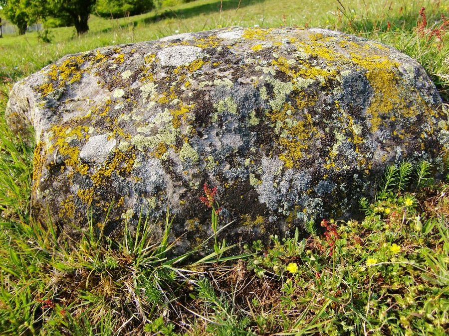 Leben am Stein
