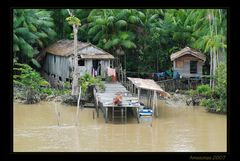 Leben auf dem Amazonas