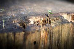 Leben auf dem Baumstamm (2)