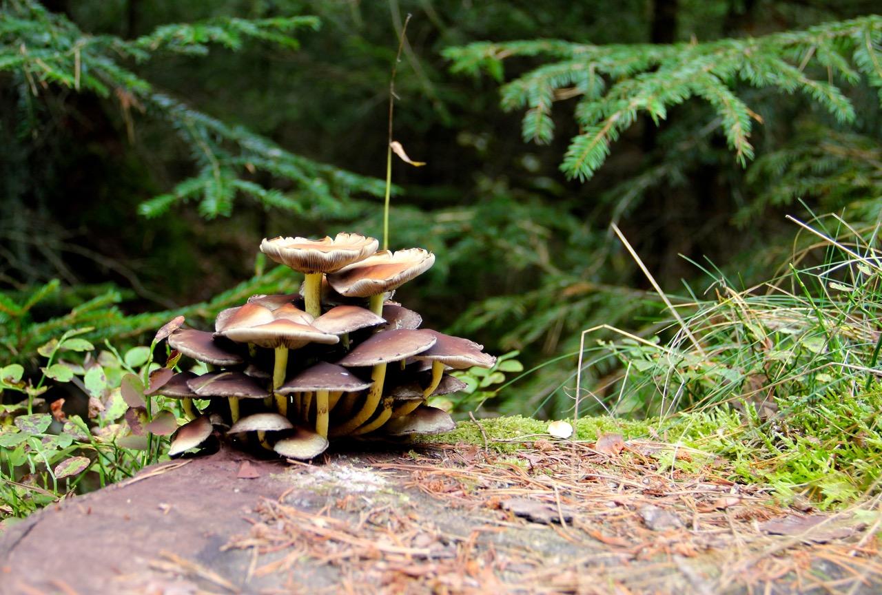 Leben auf dem Baumstrunk