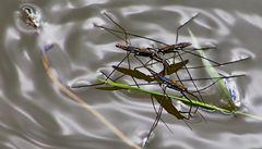 Leben auf dem Teich!
