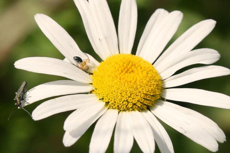 Leben auf einer Blume