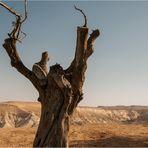 ~~ Leben erwacht in der Negev Wüste ~~