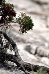 Leben im Fels