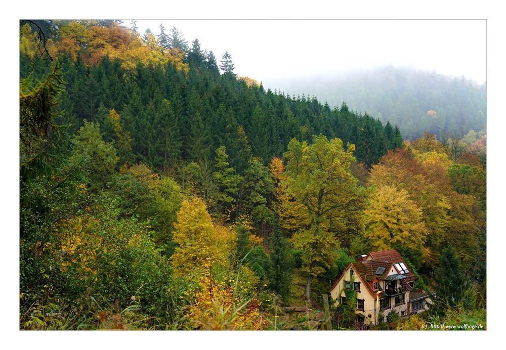 Leben im Herbstwald