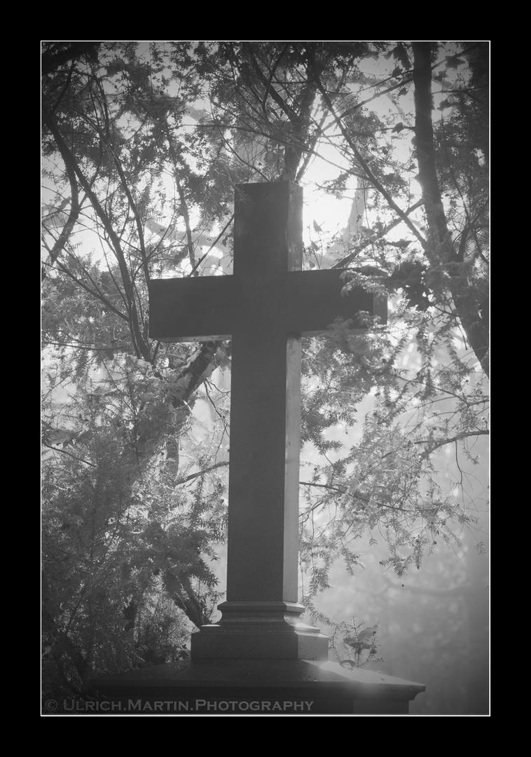 ... Leben im Nebel ...