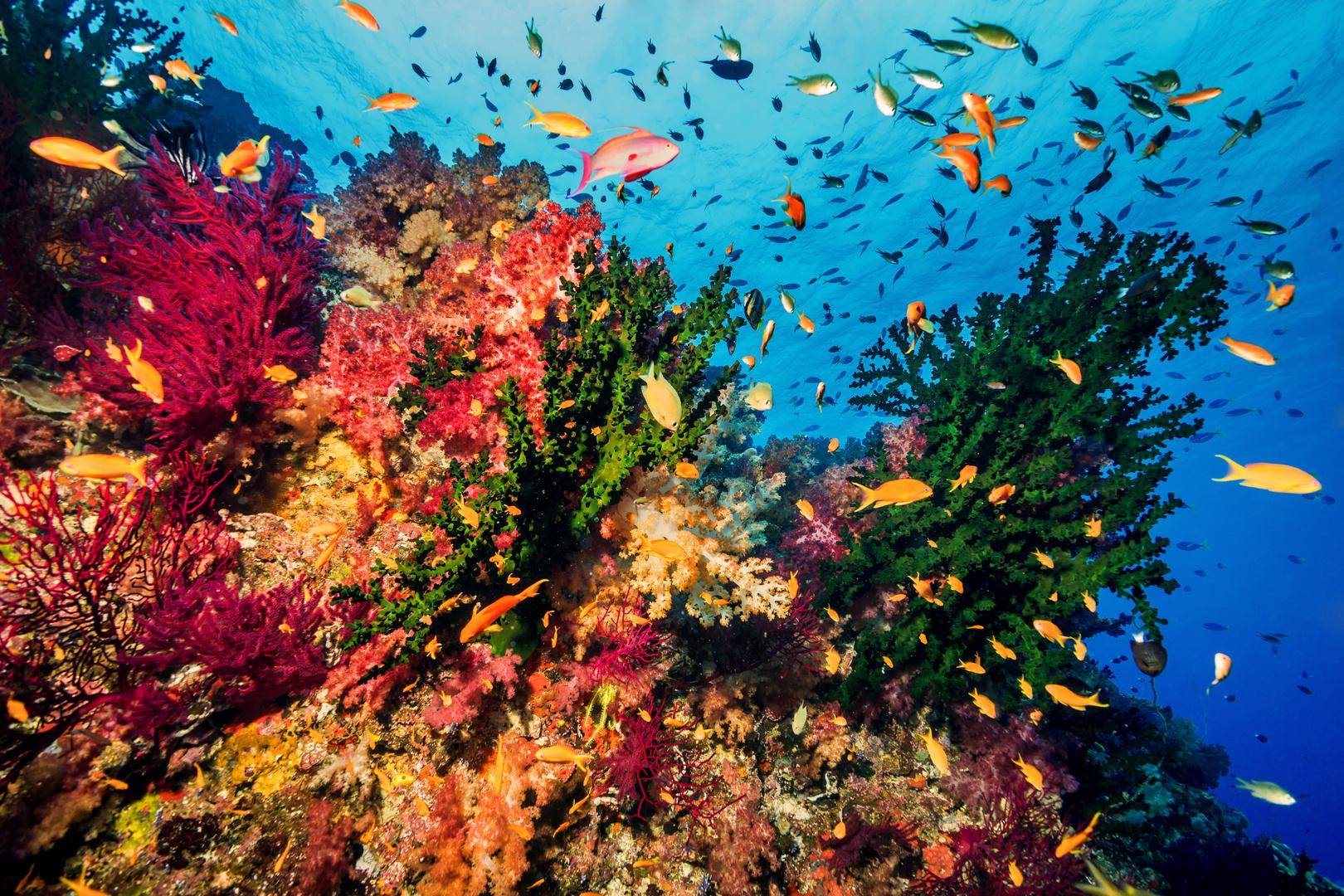 leben im riff 2 foto bild unter wasser meer natur bilder auf