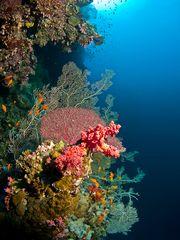Leben im Riff