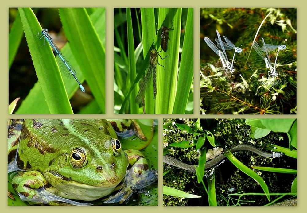 Leben im Teich.