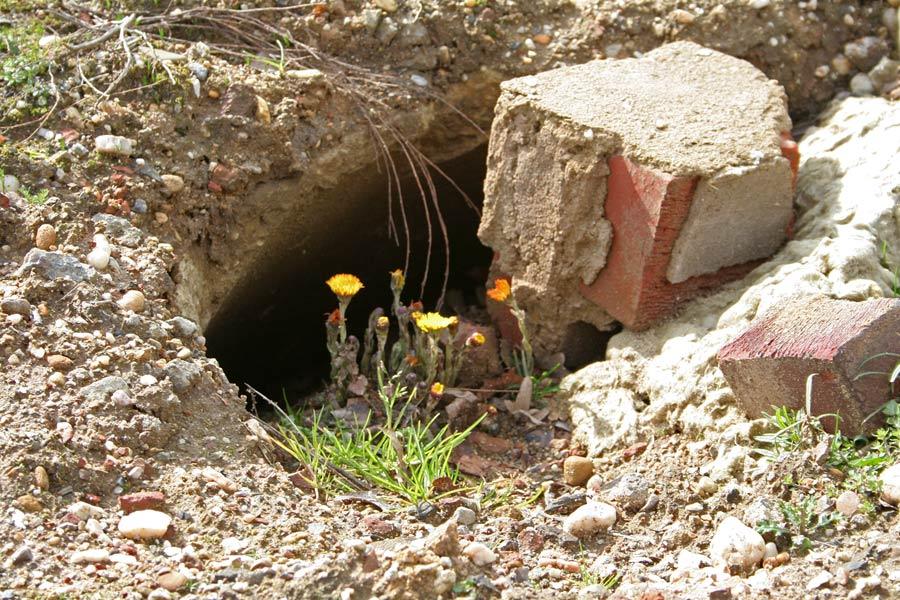 Leben mit dem Braunkohletagebau: Keine Höhle bietet mehr Schutz vor der Aushöhlung