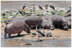 Leben und Tod am Mara River