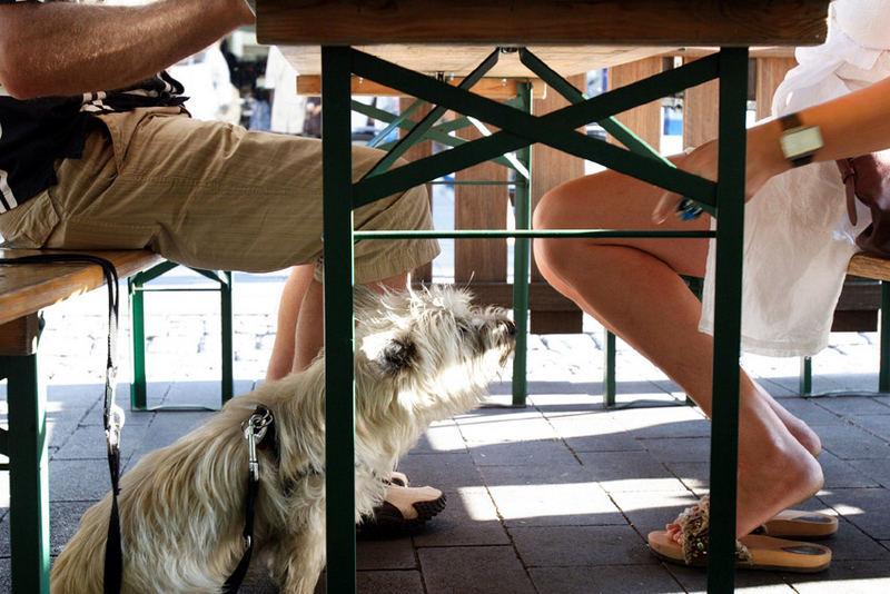 Leben unter dem Tisch
