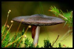 Leben unterm Pilz....