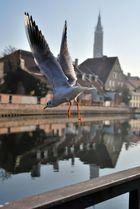 Leben wie die Möwen in Landshut