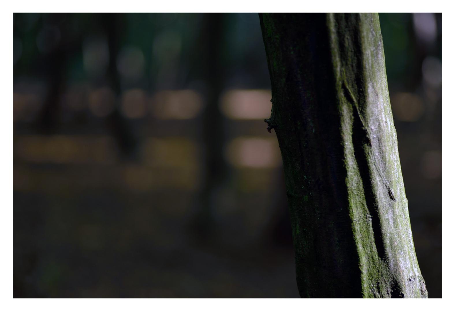 Leben wie ein Baum, einzeln und frei. Foto & Bild