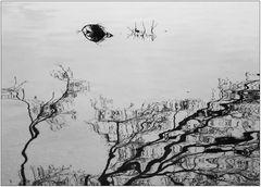 ... leben wie ein Fisch im Wasser ..!