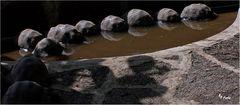 """""""lebende Steine"""""""