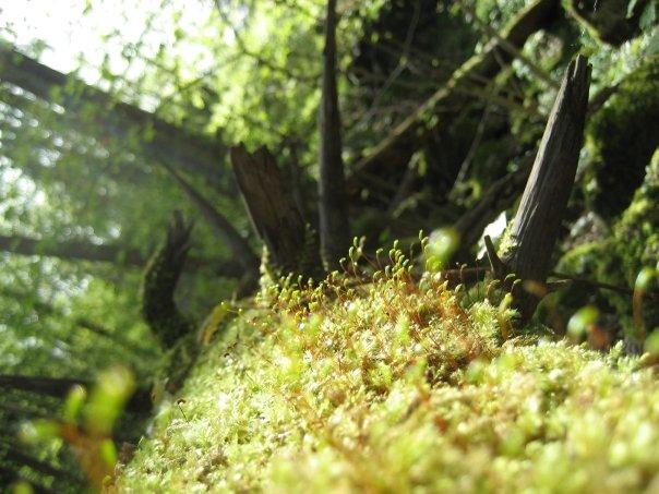 lebender-toter Baum