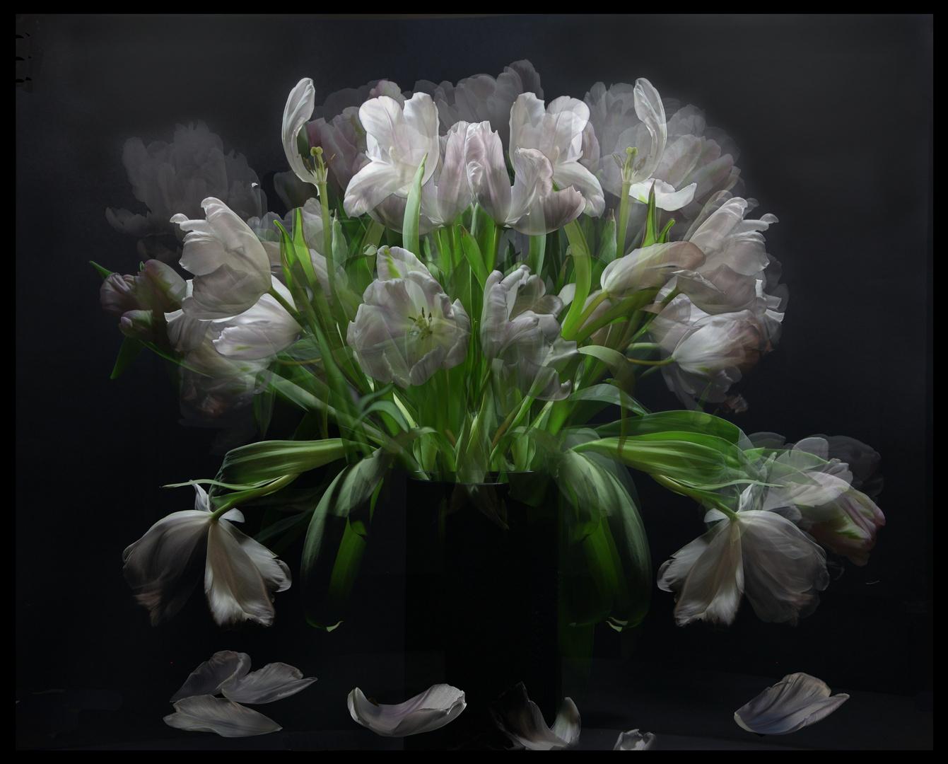 Lebender Tulpenstrauss