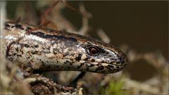 Lebendig gefallen mir die Reptilien auf jeden Fall besser :-)