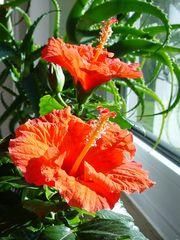 Lebensblumen