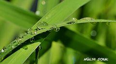 Lebenselixier Wasser und mehr....