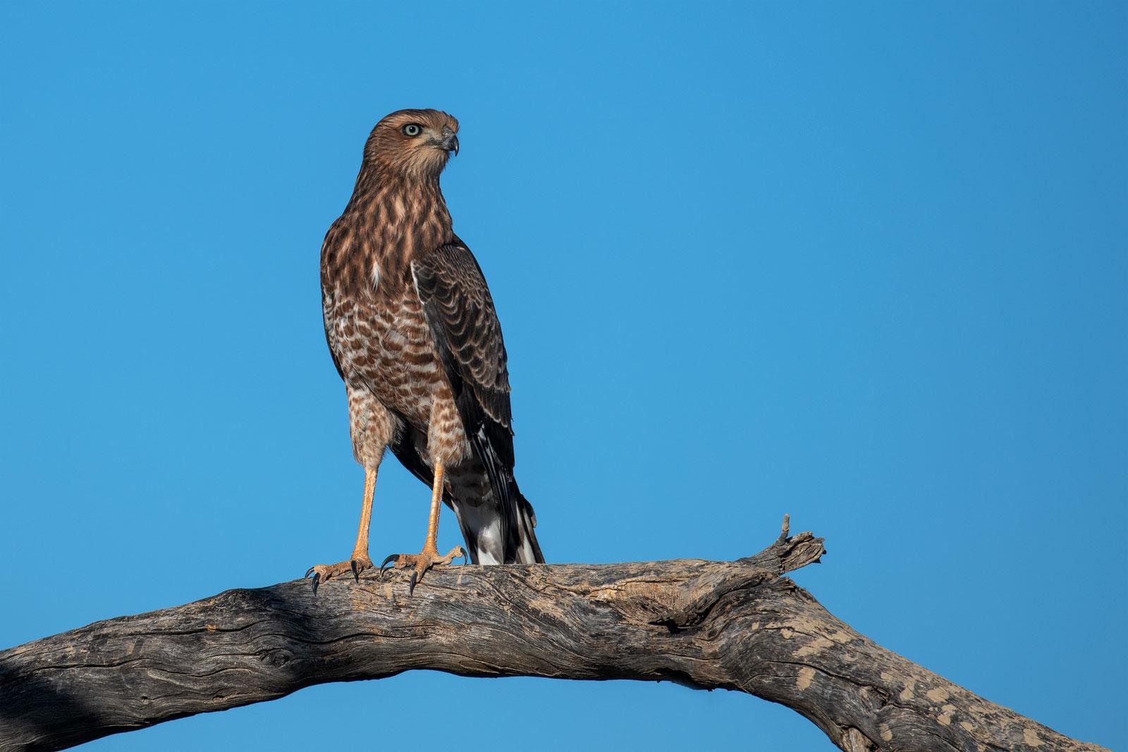 Lebensraum Kalahari (36)
