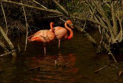 Lebensraum Mangroven