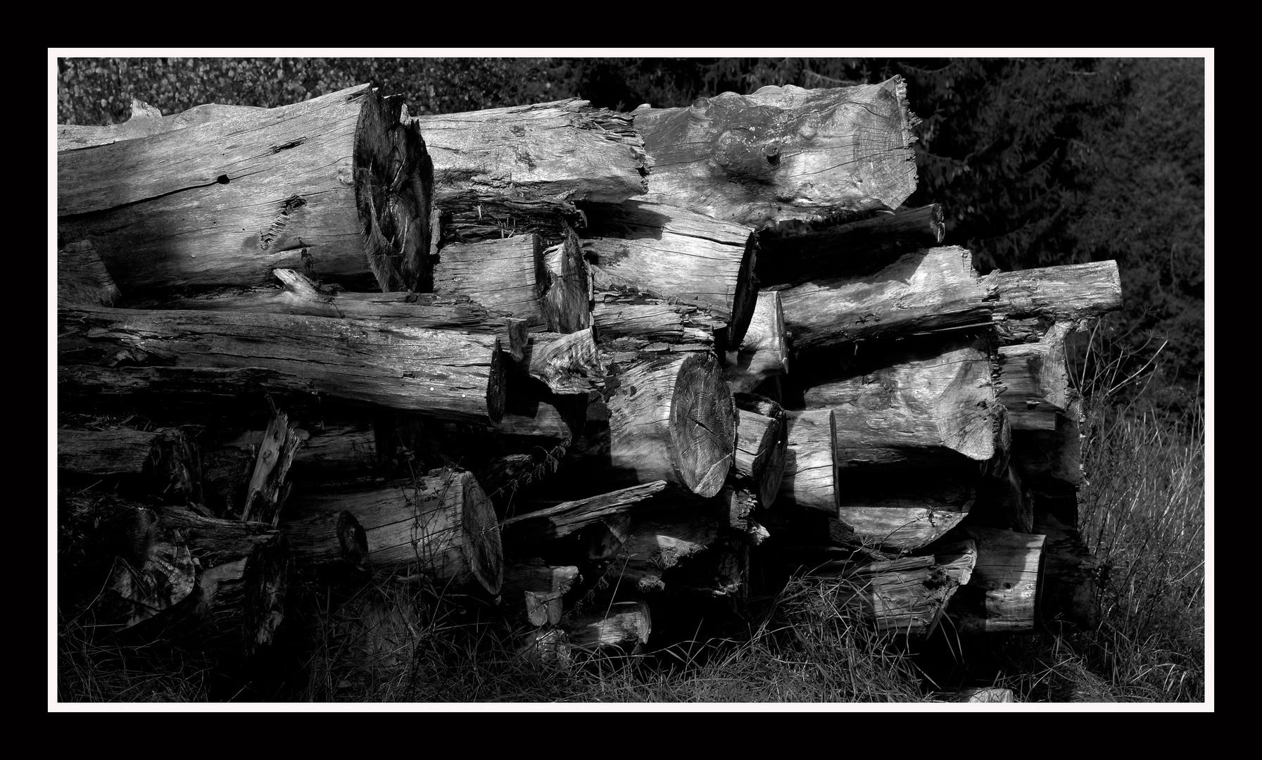 Lebensraum Moderholz