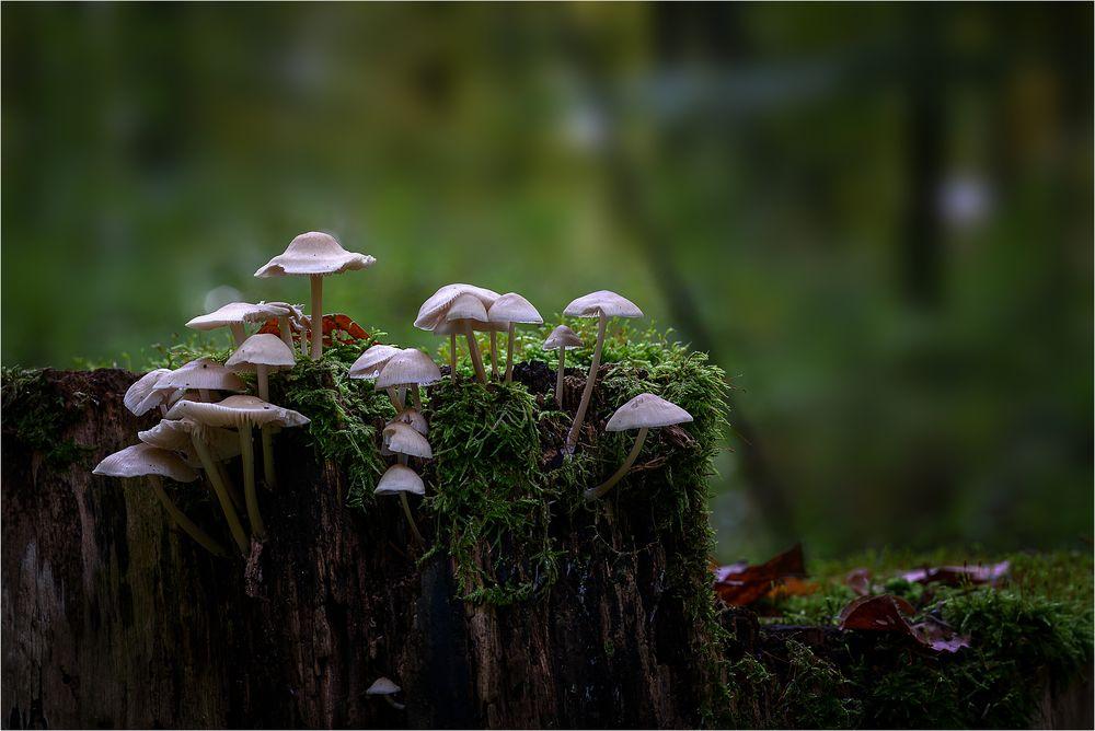 Lebensraum Totholz
