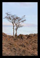 -Lebens(t)räume-