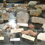 Lebewesen die vor 400 000  000 Jahren in der Eifel lebten