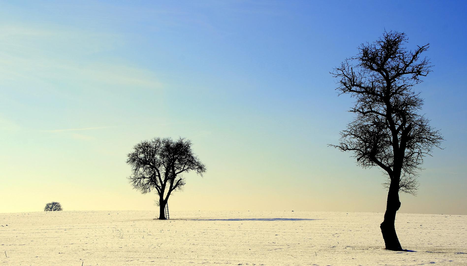 L'échelle et les trois arbres ou bien trois arbres et une échelle ?