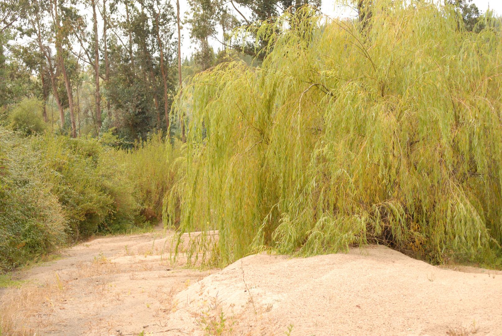 Lecho del Estero Bóquil - Vichuquén - VIIa. Región - Chile