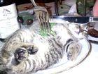 Lecker Katze :-)