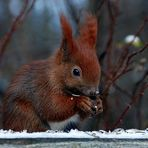 Lecker Körnchen für das Hörnchen