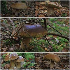 Lecker Pilze