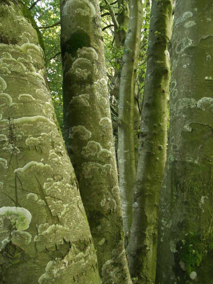 L'écriture des arbres
