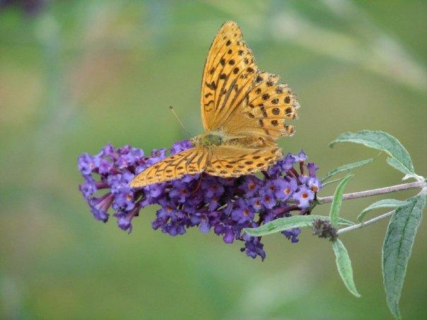 Légèreté du papillon