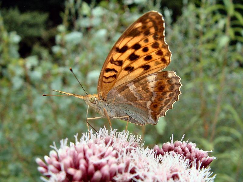 Leggero come una Farfalla