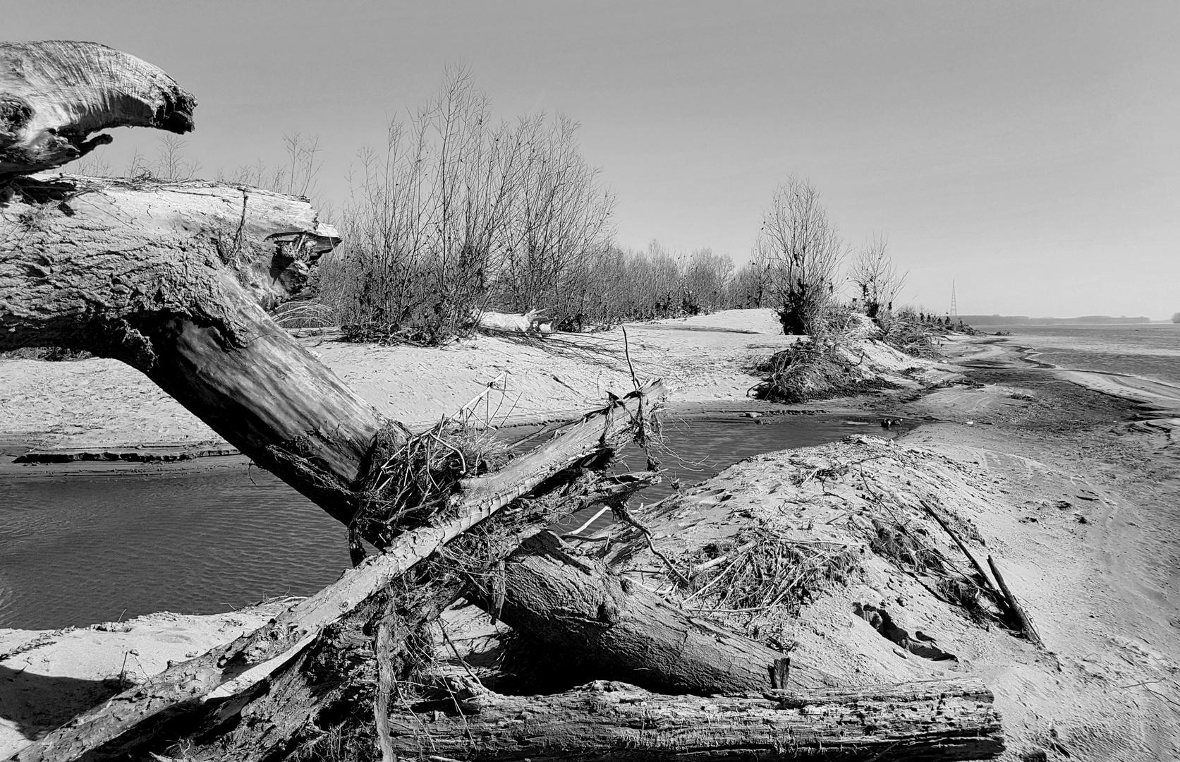 legni lavorati dal fiume