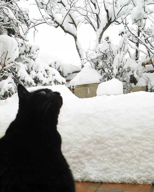 .....lei e la neve.....