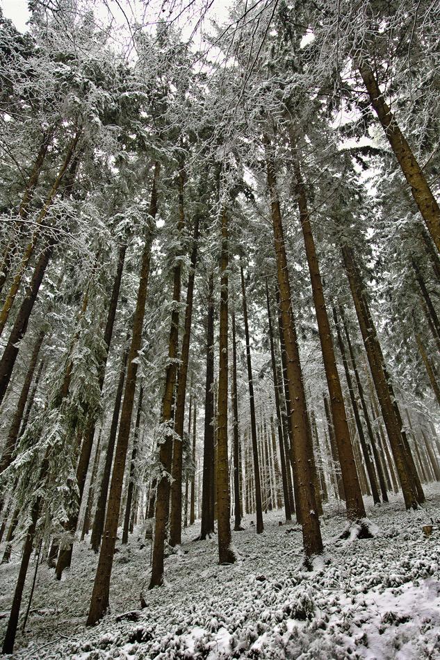 Leicht verschneiter Wald!