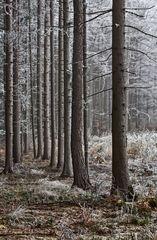 Leicht winterlich angehauchter Waldrand!