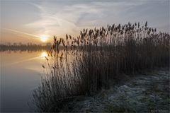 Leichter Raureif morgens am See
