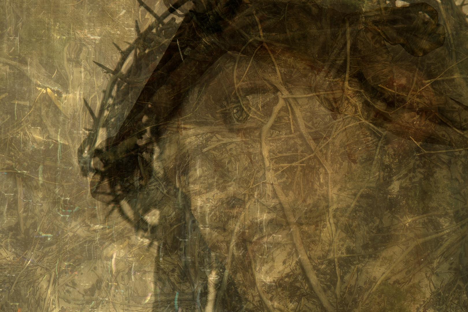 Leidender Jesus