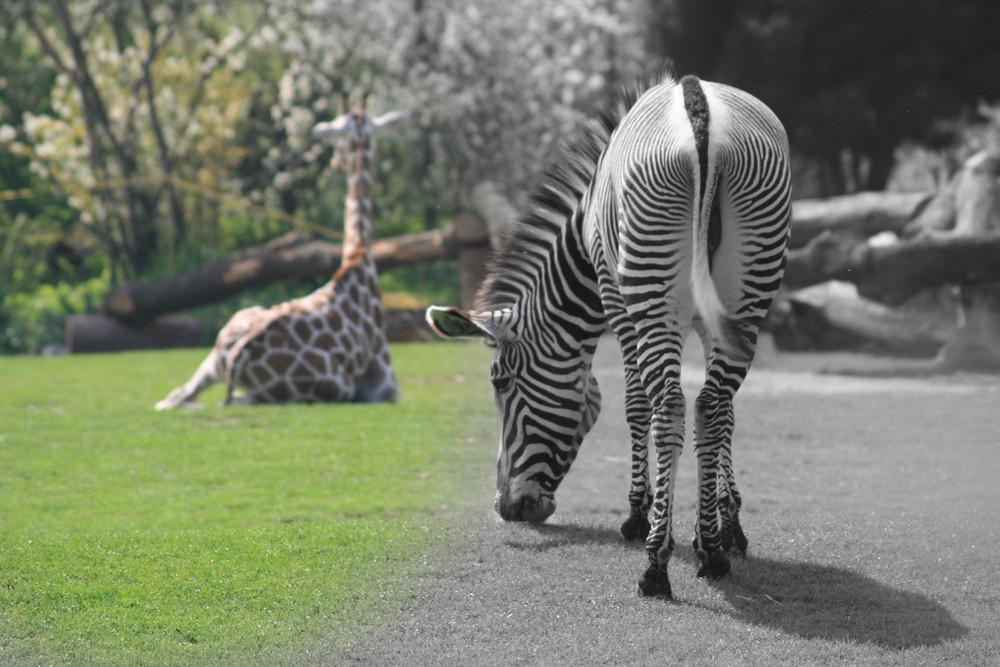 Leipziger Zoo