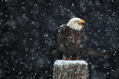 leise rieselt der Schnee ...