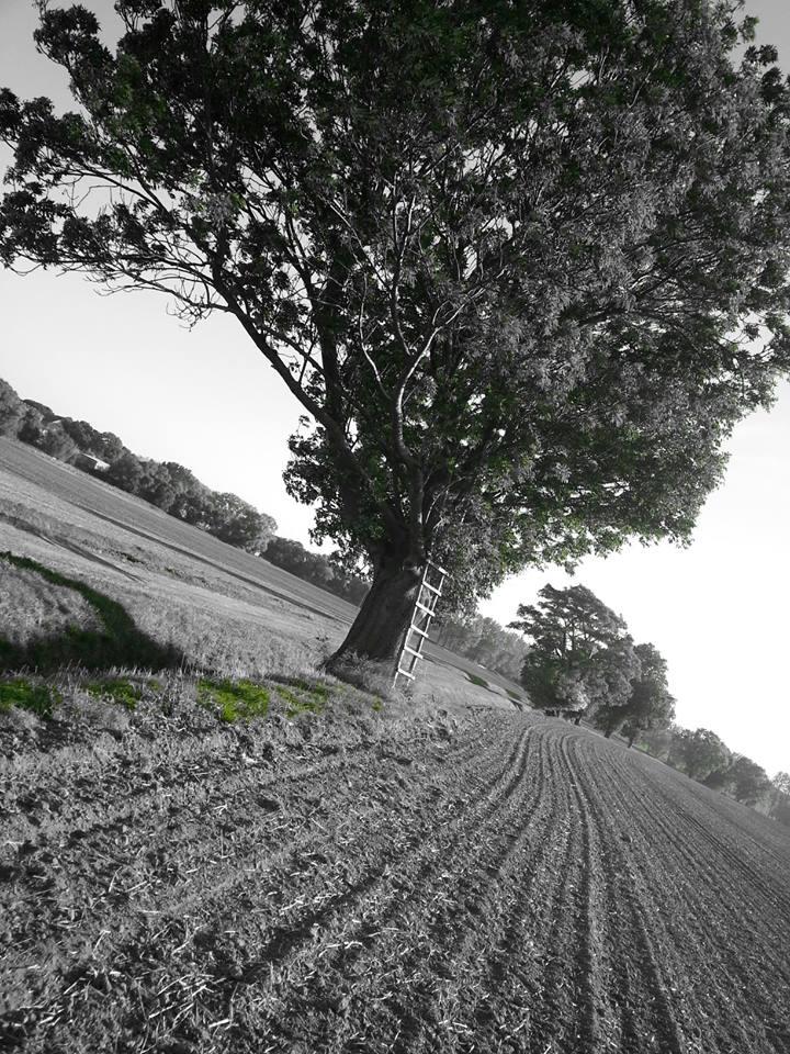 Leiter am Baum